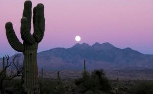Sonohra - Sonoran desert